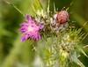 Dry Creek 20140421 (caligula1995) Tags: drycreek thistle unioncity 2014 spidersilk