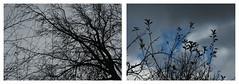 D_ptic bosc fred (http://www.fotovivaonline.com/) Tags: itinerarifotoviva itinerarifotogrfic itinerari tallerdefotografia taller talleres tallerfotogrfic