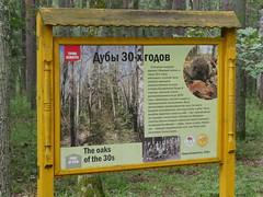 BelovezhskayaPuschaNP013 (tjabeljan) Tags: belovezhskaya pushcha national park belarus oerbos witrusland primarforest np nationalpark primarywood tsar