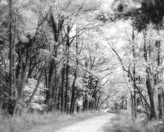 where angels live (LotusMoon Photography) Tags: forest woods path trees blackandwhite bw light shadows atmospheric blur soft softfocus angellight ethereal surreal sunlight nature outdoor bright annasheradon lotusmoonphotography