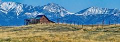 Bridger Mountains Barn (Patty Bauchman) Tags: barn montanabarn oldbarn mountains bridgermountains landscape