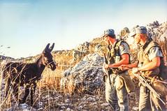 Stubborn as a mule (Normann Photography) Tags: 1992 fntjeneste forsvaret kontigent29 lebanon libanon peacecorps stubbornasadonkey unservice unifil unitednations unitednationsinterimforceinlebanon peacekeepers stubbornasamule