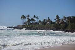DSC05271 (neilreadhead) Tags: awt1 hawaii oahu waimeabay