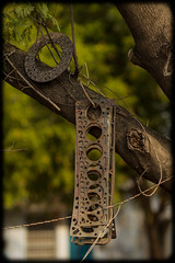 Gasket Tree (Craig Jewell Photography) Tags: gasket india madhyapradesh singrauli tree australia 20151123124016x0k1094cr2iso100f25seccanoneos1dmarkivef135mmf2lusm1evnoflash