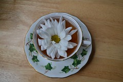 Vine teacup (I'm a sea) Tags: tea teatime time teacup cup party vine green white china fine antique vintage royal flower daisy pretty cute