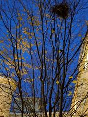 Blaue Stunde im Hof (Pascal Volk) Tags: berlin mitte alexanderplatz blauestunde blauerhimmel herbst herbstfarben huaweinexus6p