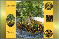 Palme und Blumen in Baden bei Wien. (Dieter14 u.Anjalie157) Tags: baden september kunterbunt kurpark urlaub