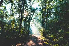 (m.majphoto) Tags: nature vsco natural naturephoto forest sunrays sunray sunrise earlymorning woods sunlight