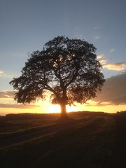 Sunset Tree (vermont1997) Tags: tree sunset nature landscape cotswolds