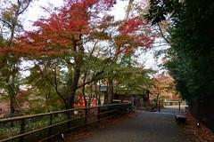 DSC02763 (MrSUIZOU) Tags: 京都 紅葉 北野天満宮 平野神社 十月桜