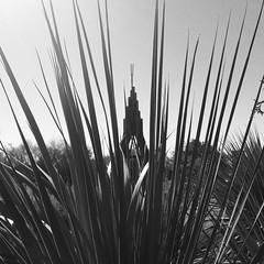 Mueller Demonstration Garden:  Wigwam by Chris Levack (woody lauland) Tags: austin texas austintx atx tx easttexas muelleraustin mueller rmma garden publicart art sculpture chrislevack blackandwhite blancoynegro blancetnoir bnw bw monochrome iphoneography