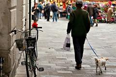 .. giorni di shopping .. (click__2961 F p) (Ziozampi) Tags: street streetphotography urban citt cane dog shopping rosa rosso rosarossa persona bicicletta bike animali fav