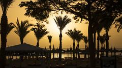 Sunset Hurghada (radomirmor) Tags: canon6d sea sunset sun palm tree egypt hurghada albatrospalace palms sigma