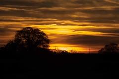 Sunset in Suffolk [Explored] (Nicola Riley) Tags: sunset evening suffolk bures light sky scenery scene landscape uk england beautiful clouds canon 7dmarkii canon7dmarkii 70200l 2016 nicolariley 2016nicolariley explore explored