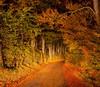 Beech Tunnel (scrumsrus) Tags: autumn trees autumncolour fall fallcolor night nightphotography road beech aberdeenshire scotland andystuartphotography tistheseason otw