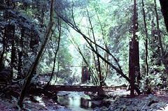 IMG_3297_0011 - footbridge (molovate) Tags: ponticello passerella tafme bosco albero volate sentiero torrente riigagnolo fiume molovate verde tronco funghi