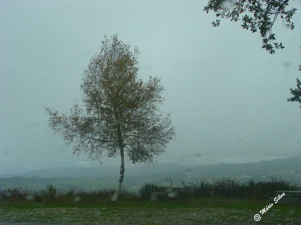 Águas Frias (Chaves) - ... a árvore solitária em manhã de nevada ...