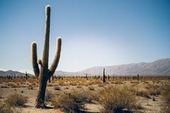 El Cardn (Nuuttipukki) Tags: el cardon argentina salta national park minimalism travel landscape argentinien