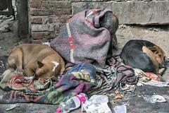 INDIA8012-----the ASYLUM (Glenn Losack, M.D.) Tags: india poverty poor caste dogs homeless crazy insane mentally ill photojournalism streetphotographer