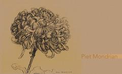 FloresPietMondrian_003 (Visualística) Tags: flores pietmondrian mondrian arte art interpretaciones abstracción paráfrasis versiones análisis flowers flower flor vegetal