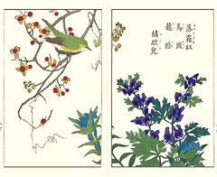 Japanese bittersweet, gentian, monkshood and Japanese white-eye (Japanese Flower and Bird Art) Tags: flower bittersweet celastrus orbiculatus celastraceae gentian gentiana makinoi gentianaceae monkshood aconitum chinense ranunculaceae bird whiteeye zosterops japonicus zosteropidae seisai ito nihonga woodblock picture book japan japanese art readercollection