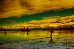 Coltivazioni perdute (Gianni Armano) Tags: coltivazioni perdute valle san bartolomeo alessandria piemonte italia foto campi di grano allagati esondazione fiume tanaro gianni armano photo flickr
