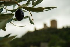 Castillo de Santa Catalina, Jan (Jess Moral) Tags: aceite andaluca castillo jan monumentos naturaleza oliva spain
