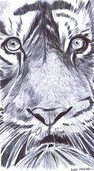 tigre a lapicero (ivanutrera) Tags: tigre draw dibujo drawing dibujoalapicero dibujoenboligrafo lapicero sketch sketching pen boligrafo animal wild wildlife tiger