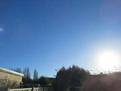 Sunday, 4th, Sunny morning IMG_0613 (tomylees) Tags: essex morning winter december 4th 2016 sunday weather blue sunshine