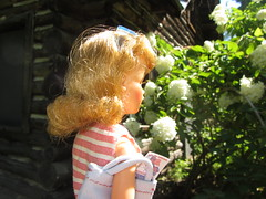 53. Admiring the hydrangea & the neglected cabin (Foxy Belle) Tags: ny abandoned vintage log cabin doll fort neglected tammy forgotten ideal grounds ticonderoga