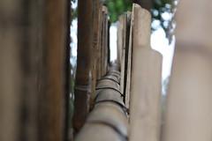 follow the way (Rodrigo Alceu Dispor) Tags: macro way pattern bamboo follow sampa sp ipiranga parquedaindepedncia