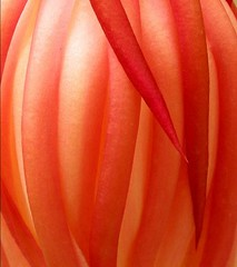 Queen of the Night (Cereus) (lienhp) Tags: red flower macro closeup soe naturesfinest firstquality fantasticflower platinumphoto theunforgettablepictures platinumheartaward tup2 vosplusbellesphotos ubej absoluterouge