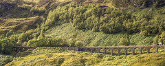 Glen Ogle viaduct (with a little bit of tilt shift effect) (Redheadwondering) Tags: bridge trees highlands photoshopped sigma viaduct trossachs 115 glenogle tiltshift sigma50mmdgmacro 115picturesin2015 46abridge