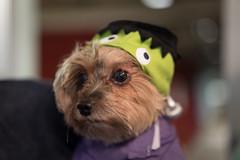 Poor Little Doggy (Mark Griffith) Tags: seattle halloween alexandria work washington amazon amazoncom pwa amazonpayments sonya7s 20151030dsc07235 paywithamazon