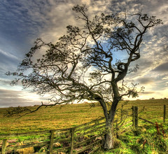 Great Wee Tree (charlieinlesmahagow) Tags: street wood autumn trees sea baby brown mountains tree fall nature beauty landscape islands scotland woods babies quiet autum natural forrest birth young scenic scottish lane junior lonely differences naturalworld autumnal hdr lochs autumntrees glens youngandold bigandsmall forrests bigdifference autumnaltrees beautifultrees smallandbig differenttrees greattrees juniour quietlane singulartree scottishtrees fantastictrees singulartrees charlieinlesmahagow charlieinscotland differentterees scottishytrees treesainautumn junur