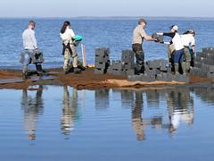 Putting Oyster Castles Together (U. S. Fish and Wildlife Service - Northeast Region) Tags: newjersey sandy volunteers erosion partnership saltmarsh usfws thenatureconservancy gandysbeach oystercastles coastalresilience hurricanesandy strongaftersandy hurricanesandyfws hurricanesandyproject77
