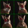 Raindeer Bunny Outtakes (Jeric Santiago) Tags: christmas pet rabbit bunny animal conejo lapin kaninchen うさぎ 兎 winterrabbit