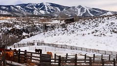 The horse's view (paul.trottier) Tags: horse usa colour art beautiful photo nikon colorado colours arty view artistic creative colourful steamboat nikkor 28300mm d610 abigfave onlythebestofflickr paultrottier