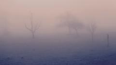 Trees in a Dream 1/2 (K M V) Tags: trees fog nebel dream arbres nebbia bäume träd dimma träume sumu treesinfog dimmigt arboli dreamylandscape meinfreundderbaum trädidimma puitasumussa unimaisema