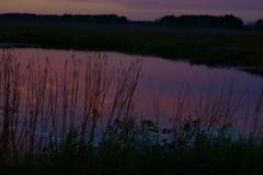 Reflections on a sunset (Wild Bill in MN) Tags: orange sunset sony a77m2 sal70400g reflections bigbluestem prairiegrass
