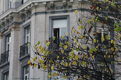 Pensive Autumn (Natali Antonovich) Tags: sweetbrussels brussels belgium belgique belgie architecture autumn pensiveautumn window windows