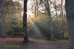 Rays of the Sun through the Autumnal Forest in France (khalid.lebdioui) Tags: colors autumn sun soleil couleurs automne france guebwiller alsace nikon d5200 flickr nikonflickraward nikonflickrawardgold yellow green landscape photo forest view fog