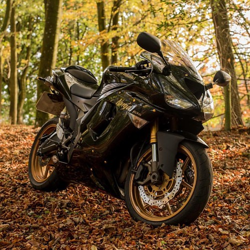 Autumn Gold ❤️🍁🍂 #kawasaki  #ninja #636 #autumn🍁  #forest  #leaves  #gold #motorcycle