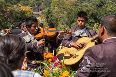 Tradiciones-15 (narr75) Tags: verde mariachi musicos msica violin guitarra panteon cementerio