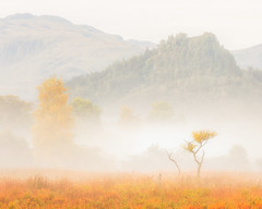 The Loneliest (Vemsteroo) Tags: lrthefader autumn cumbria lakedistrict manesty borrowdale valley tree nature trees castlecrag beautifulatmospheric mist fog derwentwater keswick ethereal fall canon 5d mkiii 70200mm beautiful sunrise dawn