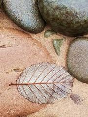 Autumn beach - Lake Superior (The Photom) Tags: sand rocks leaf beach tone contrast lakesuperior betedegris mighigan upperpeninsulaofmichigan