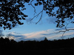 Peaceful (Cher12861 (Cheryl Kelly on ipernity)) Tags: mortonarboretum lisleillinois landscape postsunset bluehour branches silhouettes cloudslooklikemountains peaceful beautiful serene calming soothing soothesthesoul notthebestqualitybutitspeakstome blues