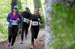 Hallwilerseelauf: Wald-Halbmarathon