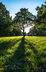 Baumlich(t) im Herbst (Svanny1982) Tags: herbst licht light autum hannover germany green grn tree baum sonne sun