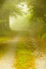 A walk together (Stories in Frames) Tags: wood walk nature mist morning fog love green path